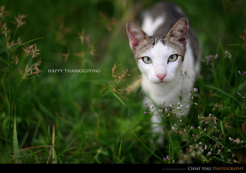 Portraiture  Photography by Chiat Hau Photography (Happy Thanksgiving)