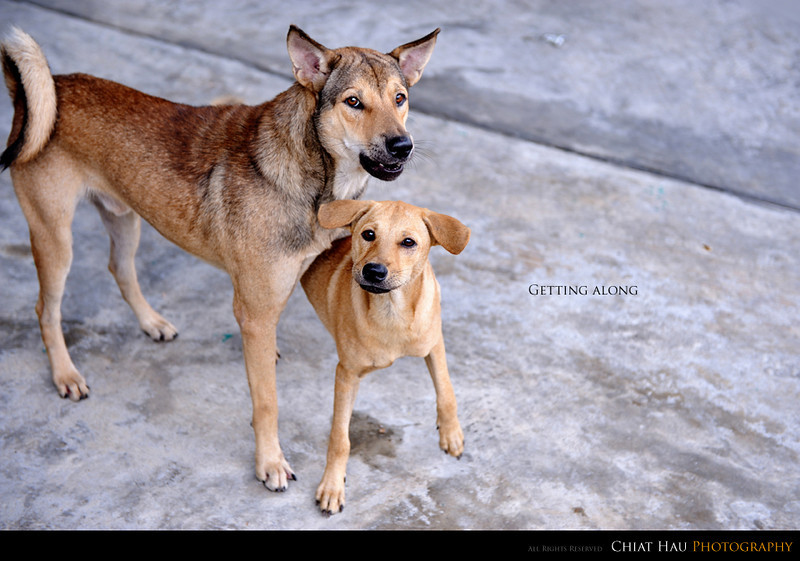 Animal Photography by Chiat Hau Photography (Dog)
