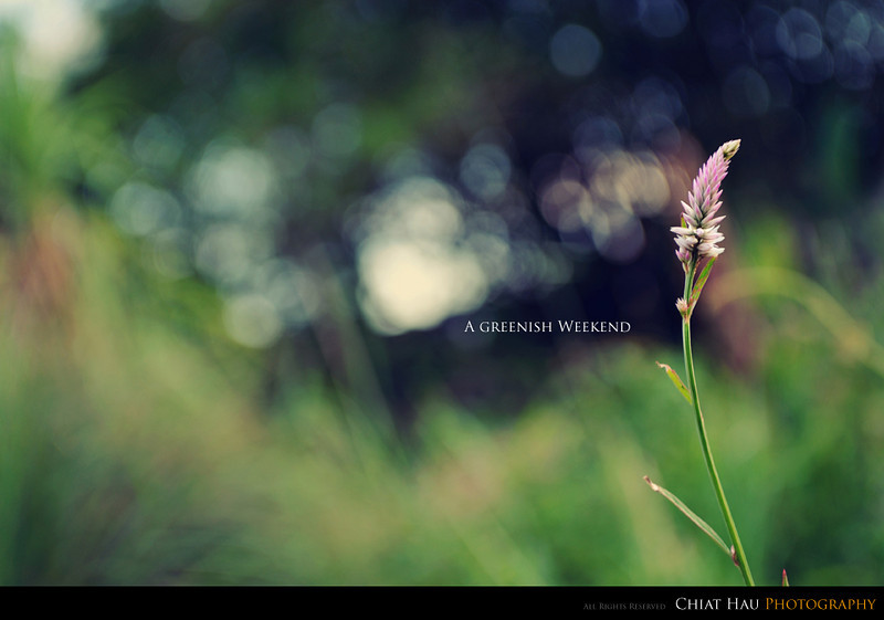 Nature Photography by Chiat Hau Photography (Flower)